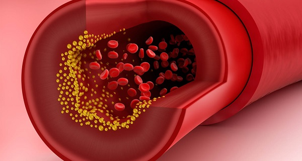 Cholesterol đóng vai trò cực kỳ quan trọng đối với cơ thể