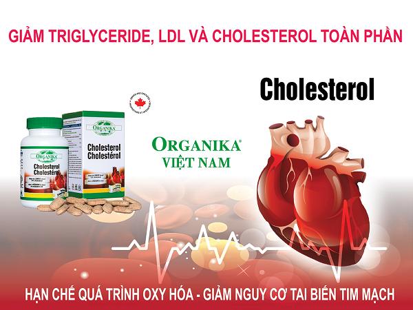 Organika Cholesterol là giải pháp giúp hạ nồng độ cholesterol trong máu