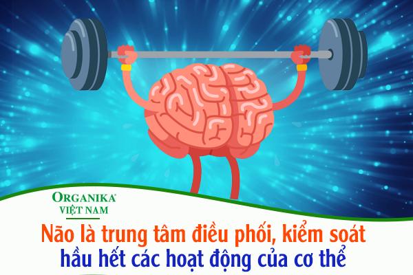 """Bộ não là """"chỉ huy trưởng"""" của tất cả những hành động của bạn"""